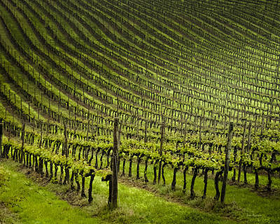 Tuscan Vineyard Series 1 Poster by John Pagliuca
