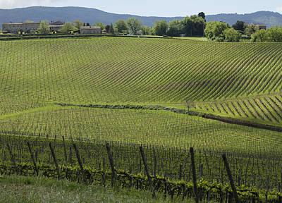 Tuscany Vineyard Series 2 Poster by John Pagliuca