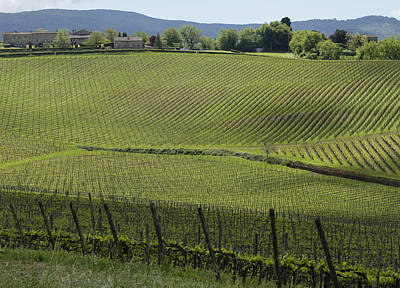 Tuscany Vineyard Series 2 Poster