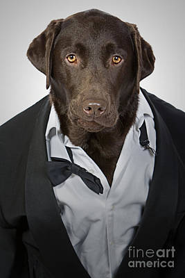 Tuxedo Dog Poster by Justin Paget