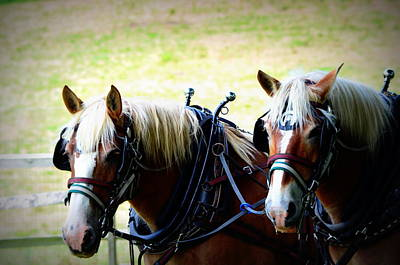 Poster featuring the photograph Twin Horses by Cathy Shiflett