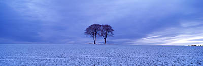 Twin Trees In A Snow Covered Landscape Poster by Panoramic Images