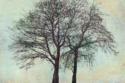 Two Alders Together Poster by Cora Niele