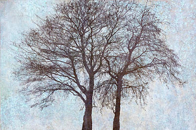 Two Alders Together II Poster by Cora Niele