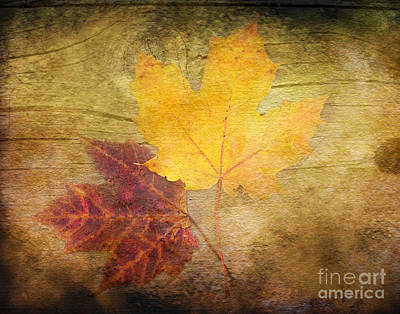 Two Autumn Leaves Poster by Kathi Mirto