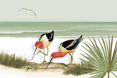 Two Avocets Poster by Anne Beverley-Stamps