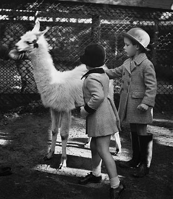 Two Children Patting A Llama Poster