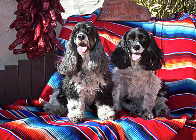 Two Cocker Spaniels Sitting Poster