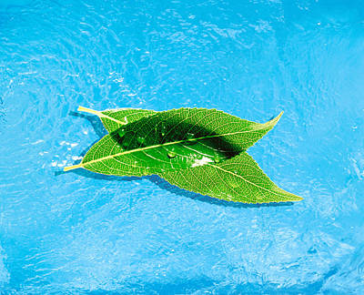 Two Crossed Green Leaves Floating Poster