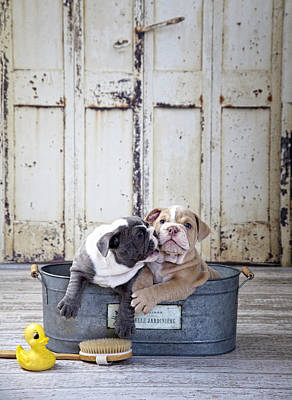 Two Dogs In Tub Poster by Lisa Jane