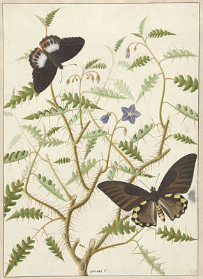 Two Exotic Butterflies On A Blooming Bush Poster by Quint Lox