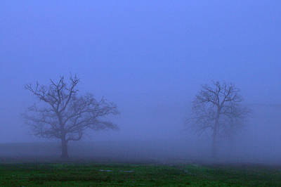 Two Foggy Trees Poster