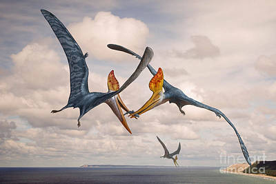 Two Geosternbergia Pterosaurs Fighting Poster by Sergey Krasovskiy