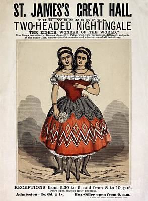 Two-headed Nightingale Poster Poster by British Library