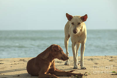 Two Homeless Dogs On The Beach Poster