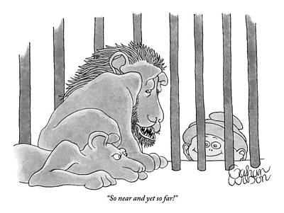 Two Lions In A Cage Look At A Young Boy Who Poster