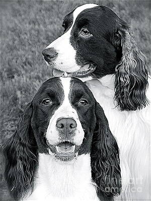 Poster featuring the photograph Two Of A Kind by Barbara Dudley