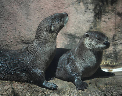 Two Otters Poster