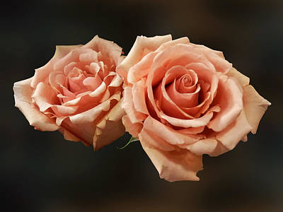 Two Peach Roses Poster by Susan Savad