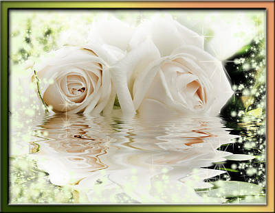 Two Pink Roses In Water Reflection Poster by Peter v Quenter