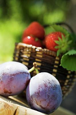 Two Plums With Drops Of Water, Strawberries In Basket Behind Poster
