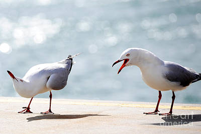 Poster featuring the photograph Two Seagulls by Yew Kwang