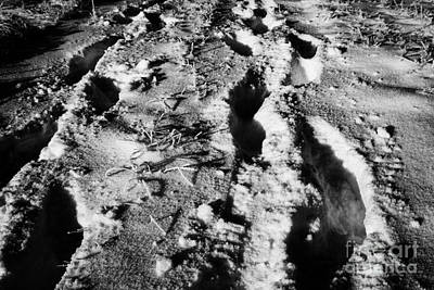 two sets of fresh footprints crossing deep snow in field Forget Saskatchewan Canada Poster