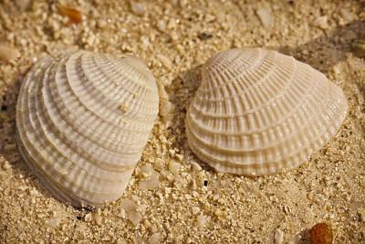 Two Shells Poster by Adam Romanowicz