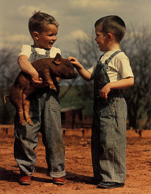 Two Small Boys With Piglet Poster