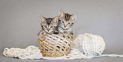 Two Tabby Kittens - Animal Rescue Portraits Poster