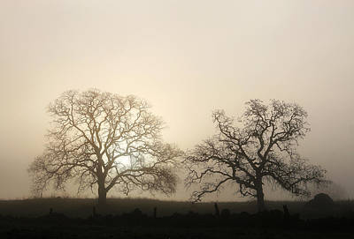 Two Trees In Fog Poster