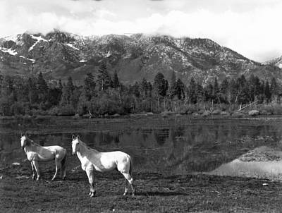 Two White Horses By A Pond Poster by Underwood Archives