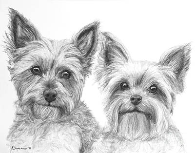 Two Yorkshire Terriers In Charcoal Poster