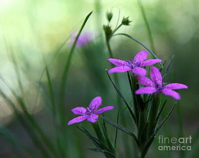 Ultra Violet Poster by Neal Eslinger