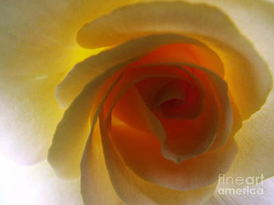 Poster featuring the photograph Unaltered Rose by Robyn King