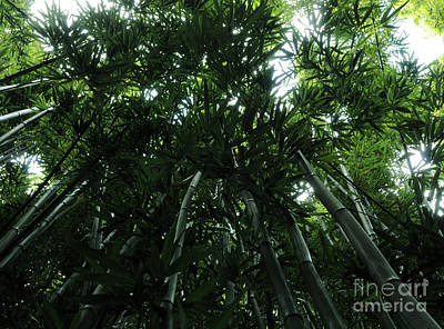 Under The Bamboo Haleakala National Park  Poster by Vivian Christopher