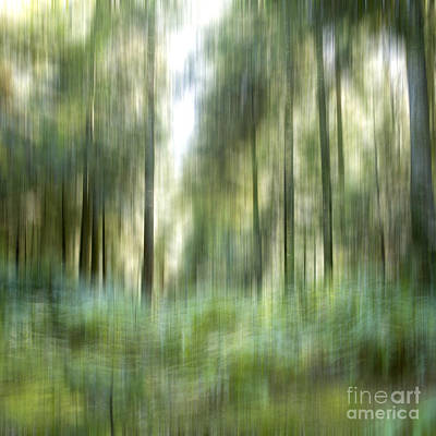Undergrowth In Spring.  Poster by Bernard Jaubert