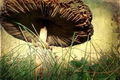 Underneath The Mushroom Poster