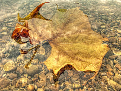 Underwater Leaf Poster by Francis Sullivan