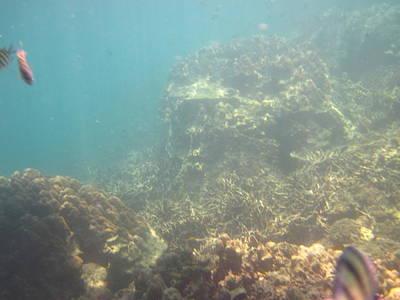 Underwater - Long Boat Tour - Phi Phi Island - 011381 Poster