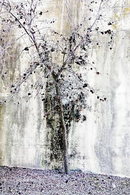 Urban Oak Tree Poster by Pamela Patch