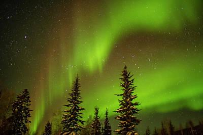 Usa, Alaska Aurora Borealis Over Spruce Poster
