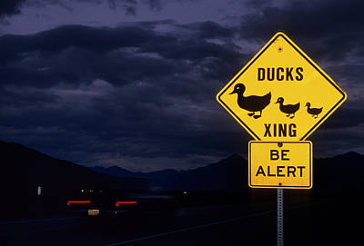 Usa, Alaska, Duck Crossing Sign Poster