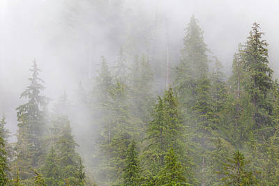 Usa, Alaska Fog In Spruce And Hemlock Poster by Jaynes Gallery