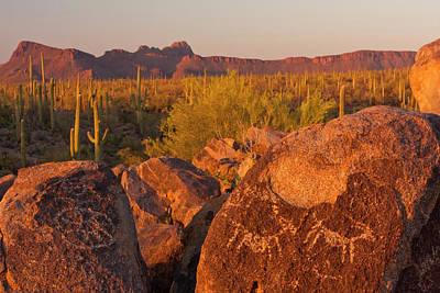 Usa, Arizona, Pima County, Saguaro Poster by Jaynes Gallery