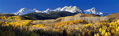Usa, Colorado, Rocky Mountains, Aspens Poster by Panoramic Images