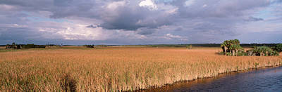 Usa, Florida, Big Cypress National Poster by Panoramic Images