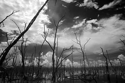 Usa, Florida, Dead Mangroves Poster
