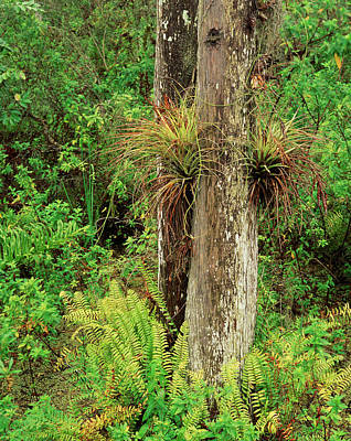 Usa, Florida, Everglades National Park Poster