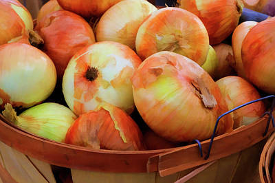 Usa, Georgia, Savannah, Sweet Onions Poster by Joanne Wells